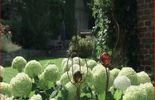 La chasse aux limaces dans le jardin de Michaela et Guido d'Eupen