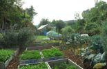 Une profusion de légumes le long de la voie de chemin de fer