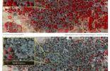 Nigeria: une mère prisonnière de Boko Haram décrit l'horreur à Baga