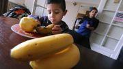 La banane et l'homme ont la moitié de leur patrimoine génétique en commun.