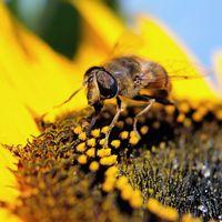 La charte Maya a pour objectif de protéger les abeilles et de favoriser leur habitat.