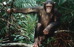 Les primates ont-il le droit fondamental de vivre en liberté?