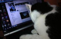 Pirate sur Facebook