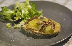 Tartine paysanne et salade, noix de Saint-Jacques, pecorino à la truffe et risotto