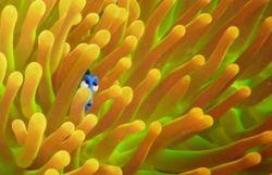 Trouvez Dory dans ces belles affiches pour La suite du Monde de Nemo