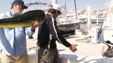 Fait divers: un phoque voleur de poisson pris sur le fait