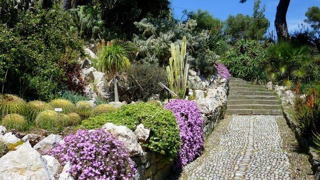 Le jardin botanique hanbury ventimiglia sur la riviera italienne rtbf jardins loisirs for Jardin hanbury