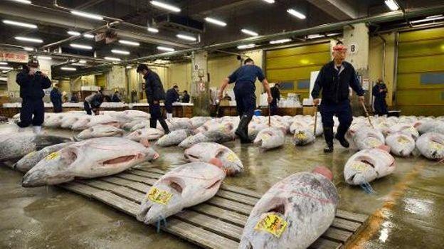 Le marché de gros des poissons de Tsukiji à Tokyo, premier marché de poissons du monde, photographié le 22 novembre 2013. Ici des grossistes vérifiant une cargaison de thons surgelés avant une vente aux enchères.