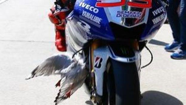 La mouette de lorenzo rtbf moteurs - Lorenzo prenom ...