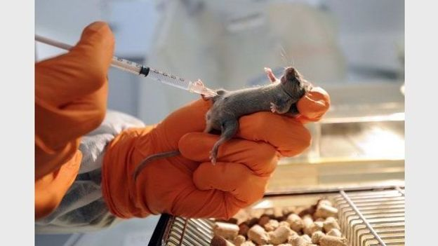 Le sucre peut être dangereusement toxique chez les souris