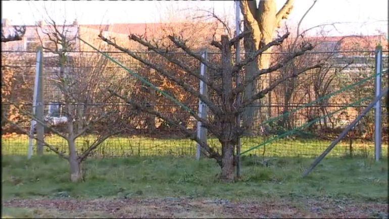 Le verger municipal de tourcoing 1 2 extrait de l for Jardins et loisirs